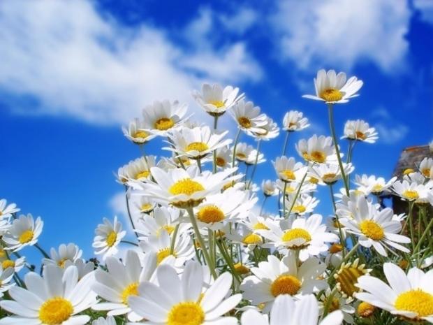 Frühling in Pinija